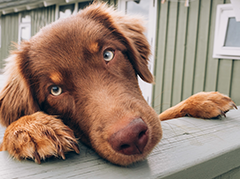 Pet Friendly Homes Quick Search